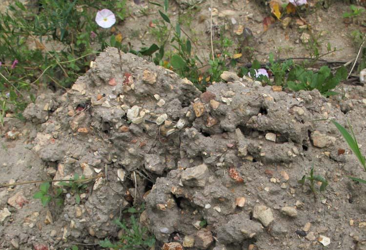 1mikael_bouges_faverolles-sur-cher_roky_soil_gravel