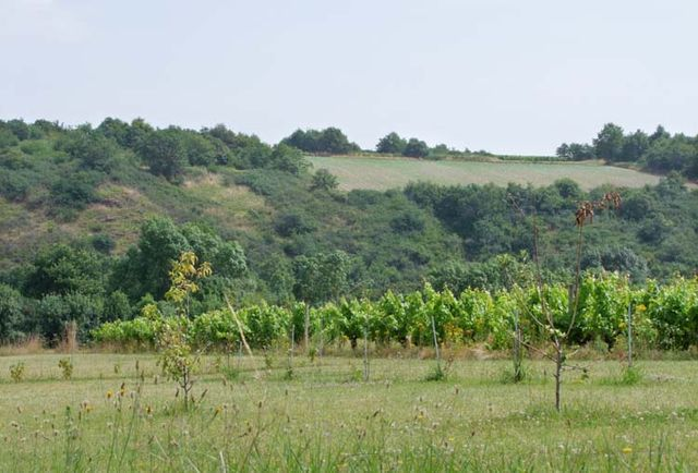 1anjou_coteaux_du_layon_former_vineyards