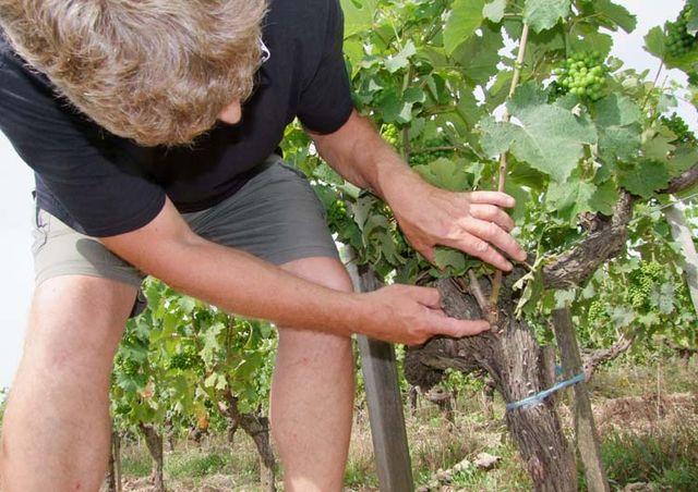 1richard_leroy_montbenault_pruning