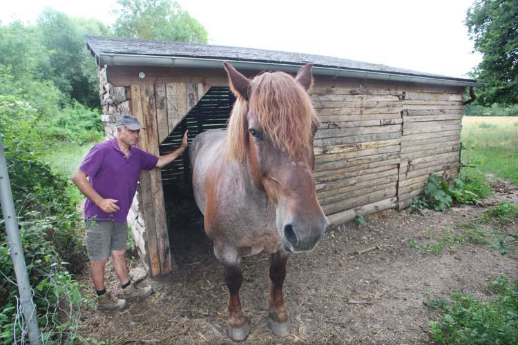 1mark_angeli_draft_horse_stable1