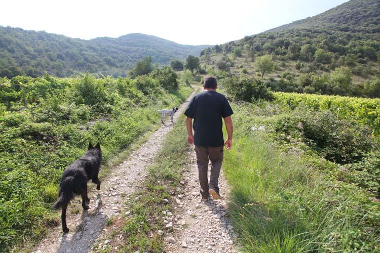 1gilles_azzoni_walking_to_vineyards