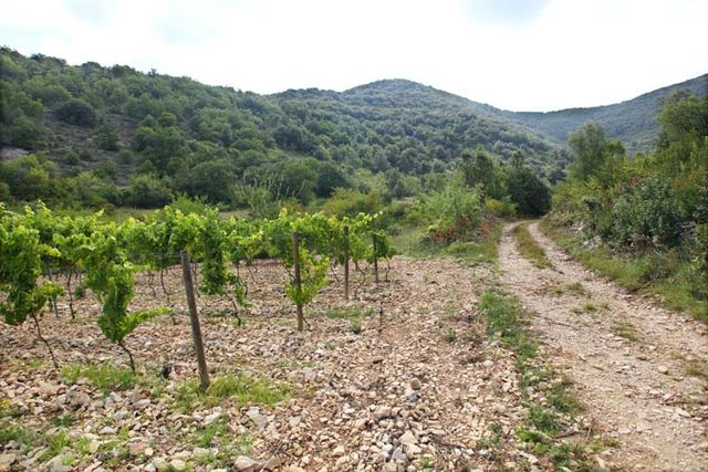 1gilles_azzoni_parcel_against_garrigue