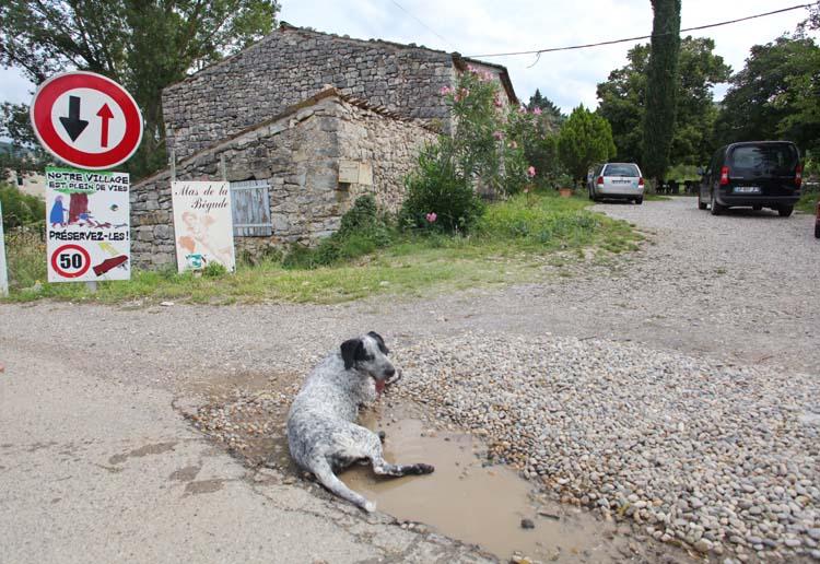 1gilles_azzoni_begude_ibie_dog_bathing