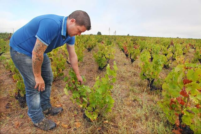 1remi_dufaitre_old_gamay_vines