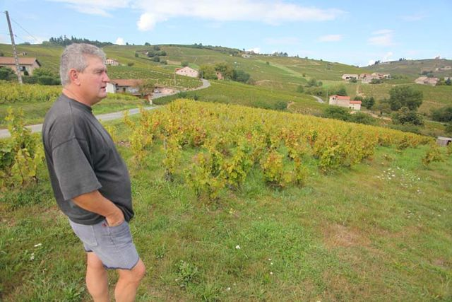 1yvon_metras_old_vines_near_chai
