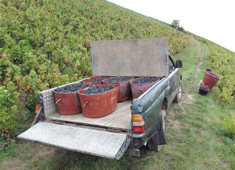 1yvon_metras_pickup_harvest_crates