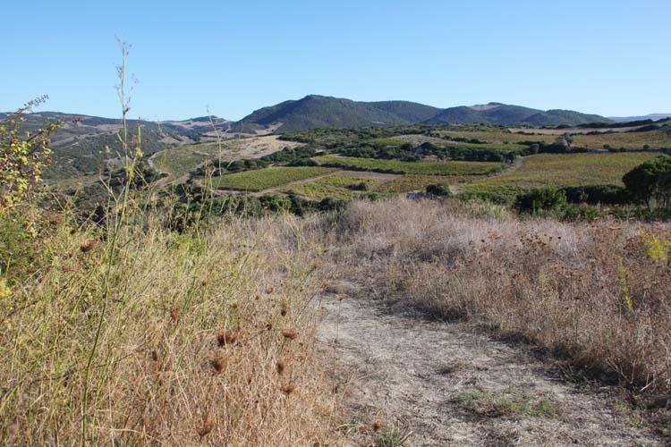 1dettori_tenute_landscape_near_facility
