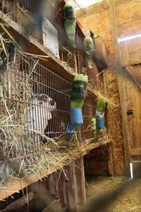 1ruppert-leroy_farm_animals_rabbits