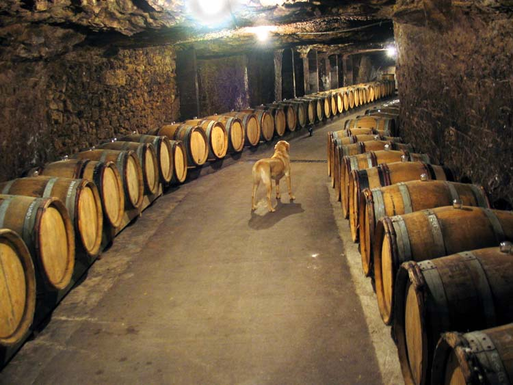 1lemaire-fournier_dog_in_cask_cellar