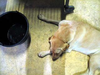 1lemaire-fournier_dog_nap
