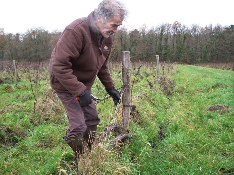 1CRB_didier_barrouillet_pruning_woods