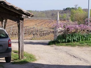 1clos-siguier_montcuq_cahors_vineyards_close
