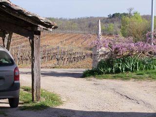 1clos-siguier_montcuq_cahors_vineyards_close