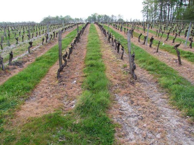 1herbicide_vineyard1