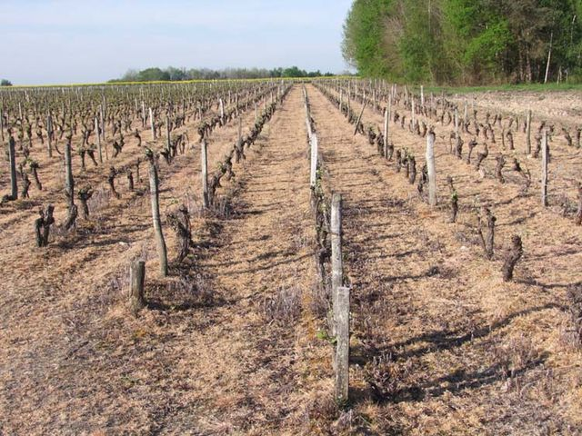 1herbicide_vineyard3