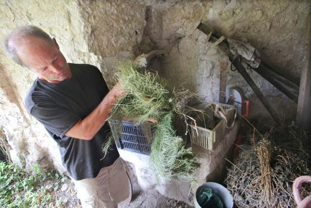 1bruno_allion_herbs_for_preparations_biodynamy