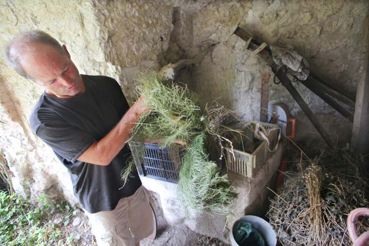 1bruno_allion_herbs_for_preparations_biodynamy
