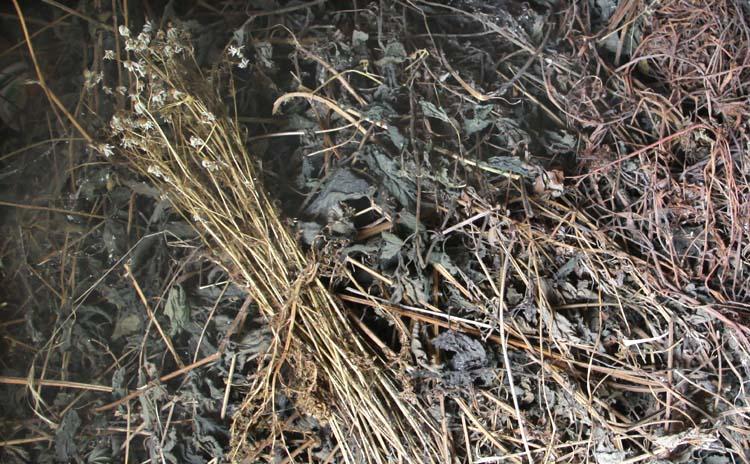 1bruno_allion_dry_herbs