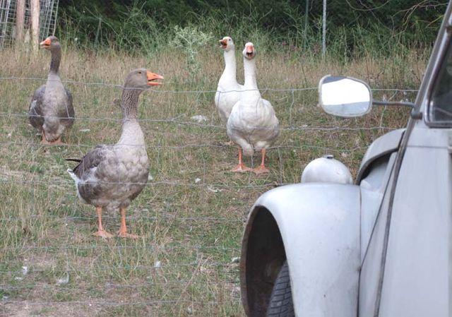 1bruno_allion_farm_animals
