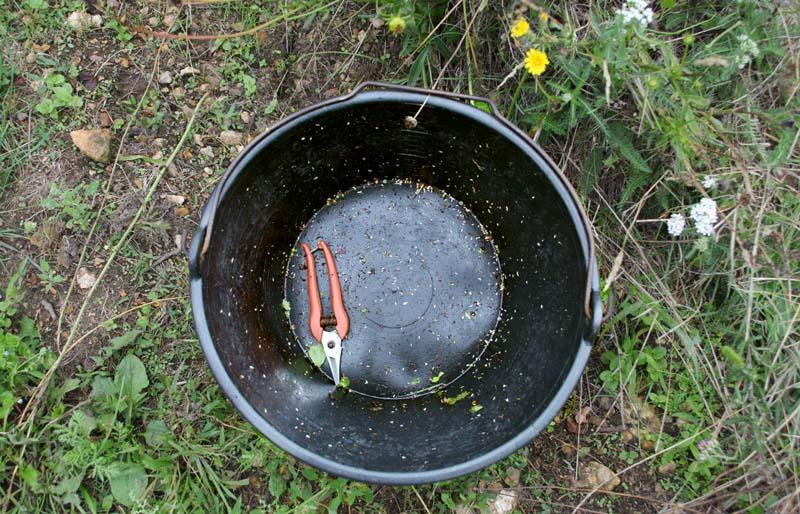 1julien_pineau_bucket_harvest_shears