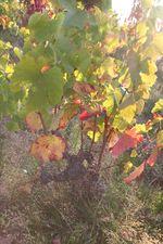1julie_balagny_old_vine_moulin_a_vent