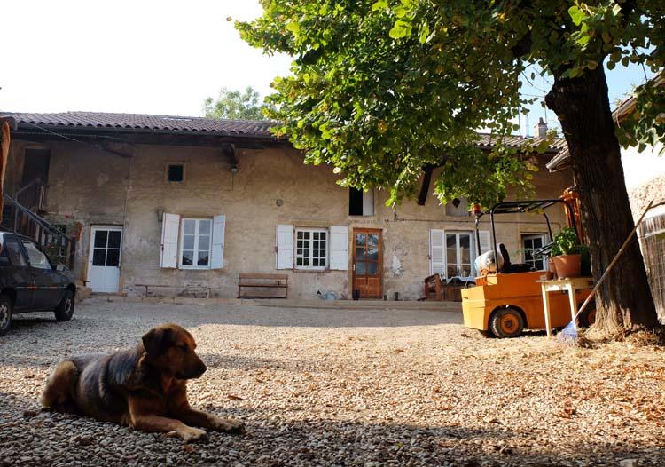 1julie_balagny_dog_courtyard