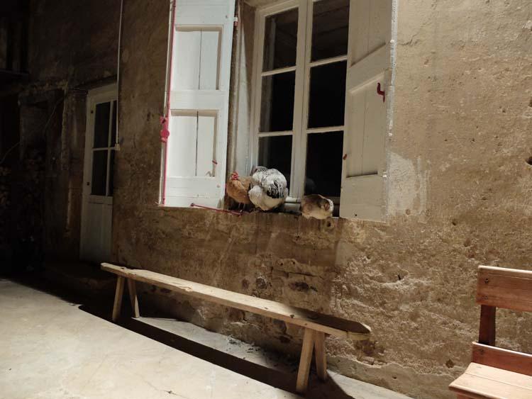 1julie_balagny_hens_sleeping_on_window