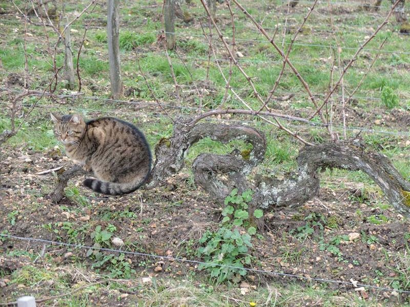 1catherine_roussel_cat_on_old_cot-2