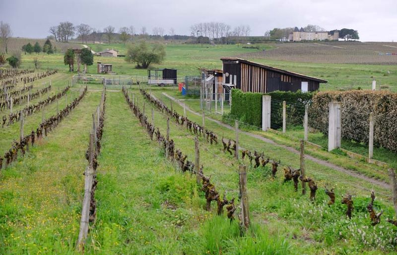 1rousset-peyraguey_yquem_in_the_far