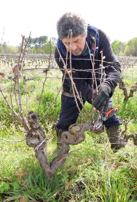 1rousset-peyraguey_alain_dejean_sauternes_vine