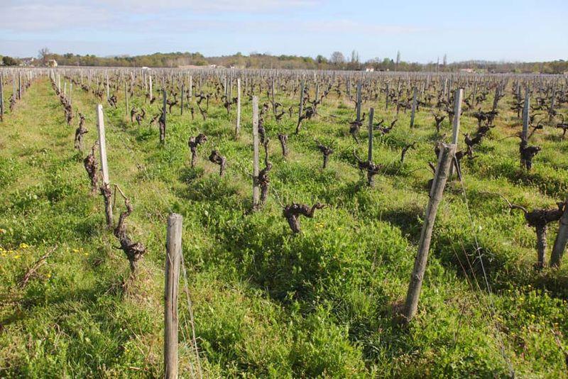 1les_trois_petiotes_vineyard