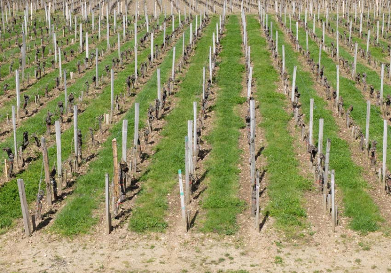 1pesticides_pomerol_with plowing