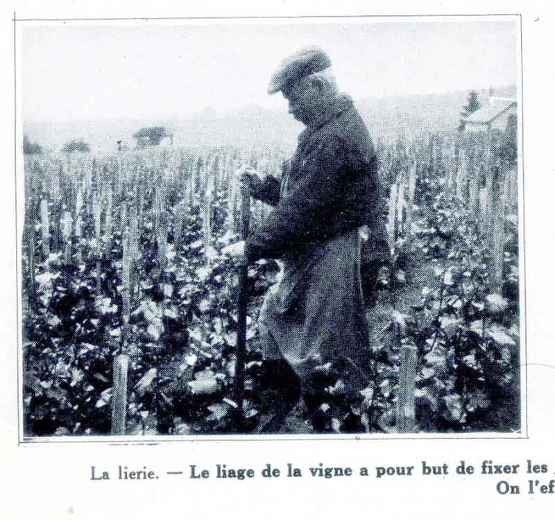 1champagne_1920s-3lierie