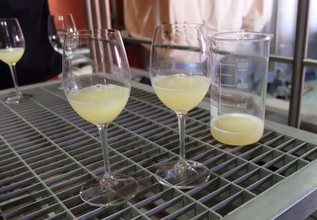 1armenia_wine_factory_new_white_wine_bernache