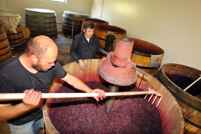 1nicolas_vauthier_spreading_grapes_press