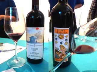 1news_vini_bellotti_wines