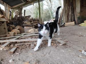 1sylvain_leest_wine_farm_cat