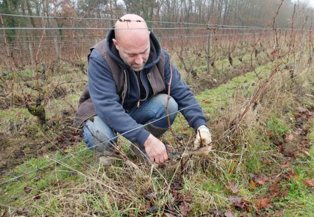 1laurent_saillard_pruning_sauvignon