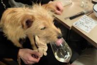 1le_desnoyez_dog_loves_real_wine