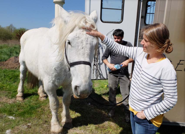 1cedric_bernard_roxane_with_horse