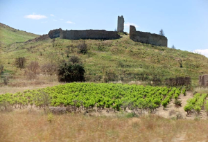 1languedoc_castle_vineyard