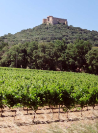 1languedoc_castle__top_hill_vineyard