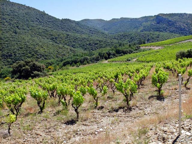 1liviniere_minervois_vineyard