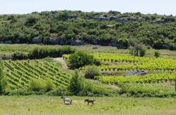 1a_liviniere_languedoc_horses_parcels