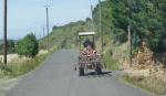 1languedoc_tracteur_vigneron