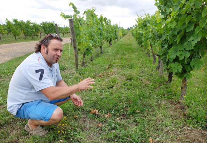 1sebastien_david_cabernet_franc_vineyard