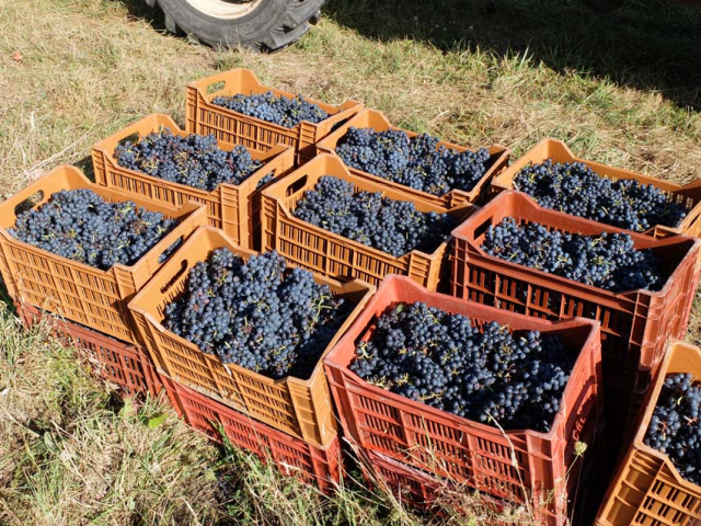 1maisons_brulees_boxes_of_gamay