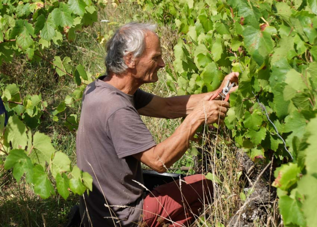 1maisons_brulees_michel_picking