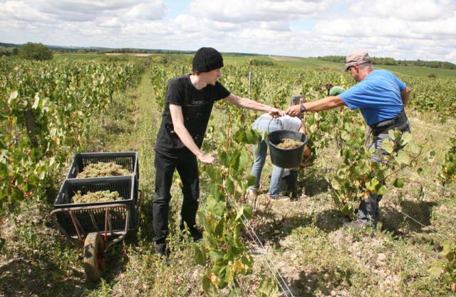 1bruno_allion_harvest_passing_buckets