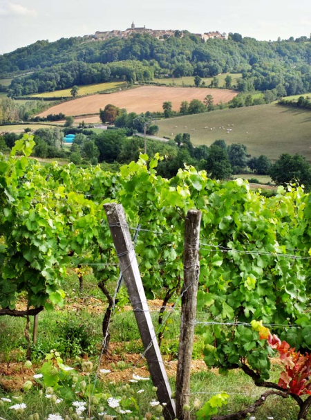 1flavigny_vineyard_village1